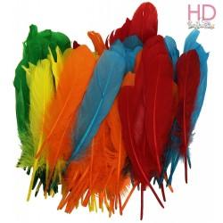 Piume gallina colorate 10-14cm  x 20pz